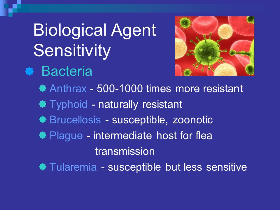 Biological Agent Sensitivity  Bacteria  Anthrax - 500-1000 times more resistant  Typhoid - naturally resistant  Brucellosis - susceptible, zoonotic  Plague - intermediate host for flea transmission  Tularemia - susceptible but less sensitive