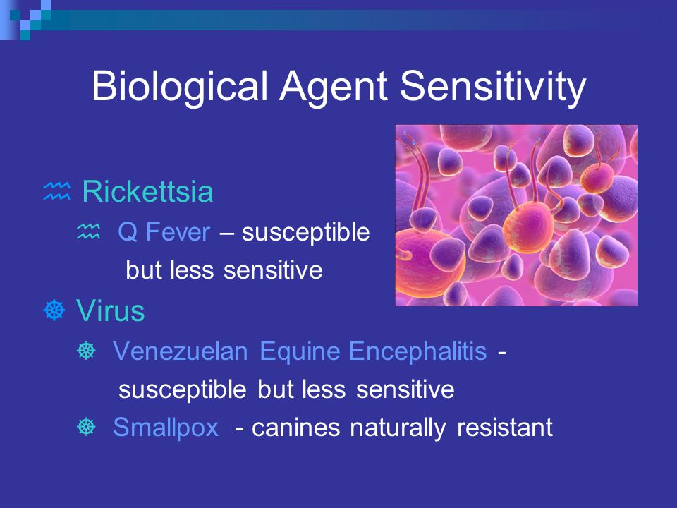 Biological Agent Sensitivity  Rickettsia  Q Fever – susceptible but less sensitive  Virus  Venezuelan Equine Encephalitis - susceptible but less sensitive  Smallpox - canines naturally resistant