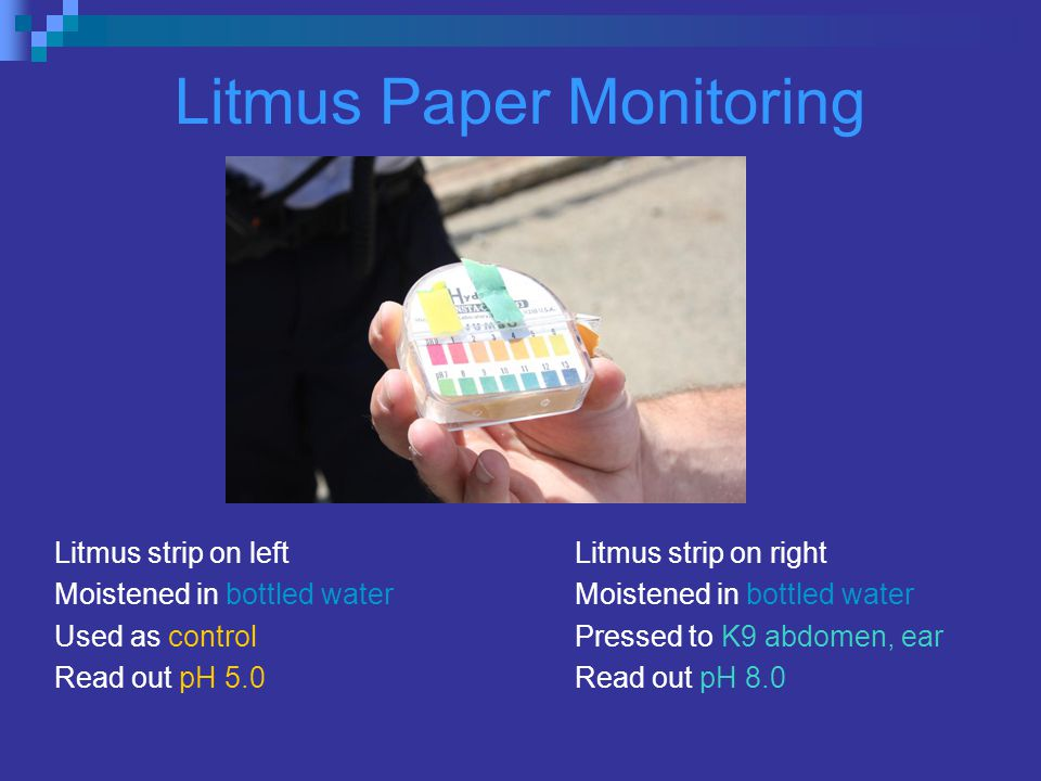 Litmus Paper Monitoring Litmus strip on leftLitmus strip on right Moistened in bottled waterMoistened in bottled water Used as controlPressed to K9 abdomen, ear Read out pH 5.0Read out pH 8.0