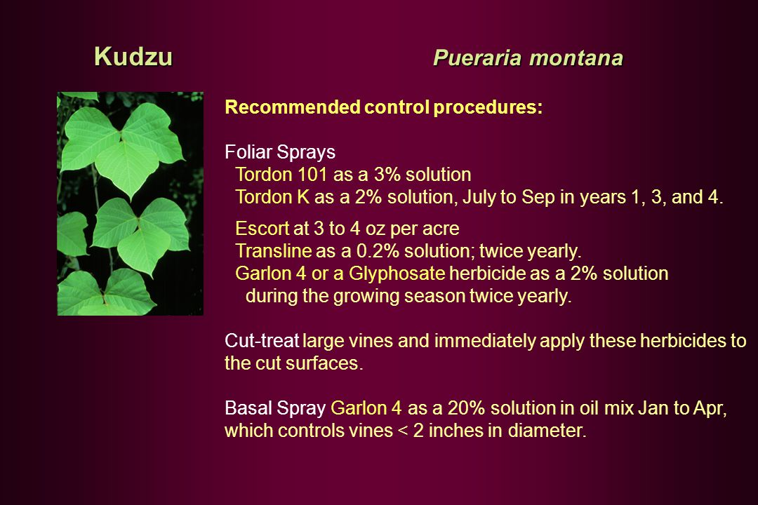 Recommended control procedures: Foliar Sprays Tordon 101 as a 3% solution Tordon K as a 2% solution, July to Sep in years 1, 3, and 4.