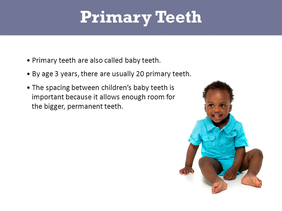 Primary Teeth Primary teeth are also called baby teeth.