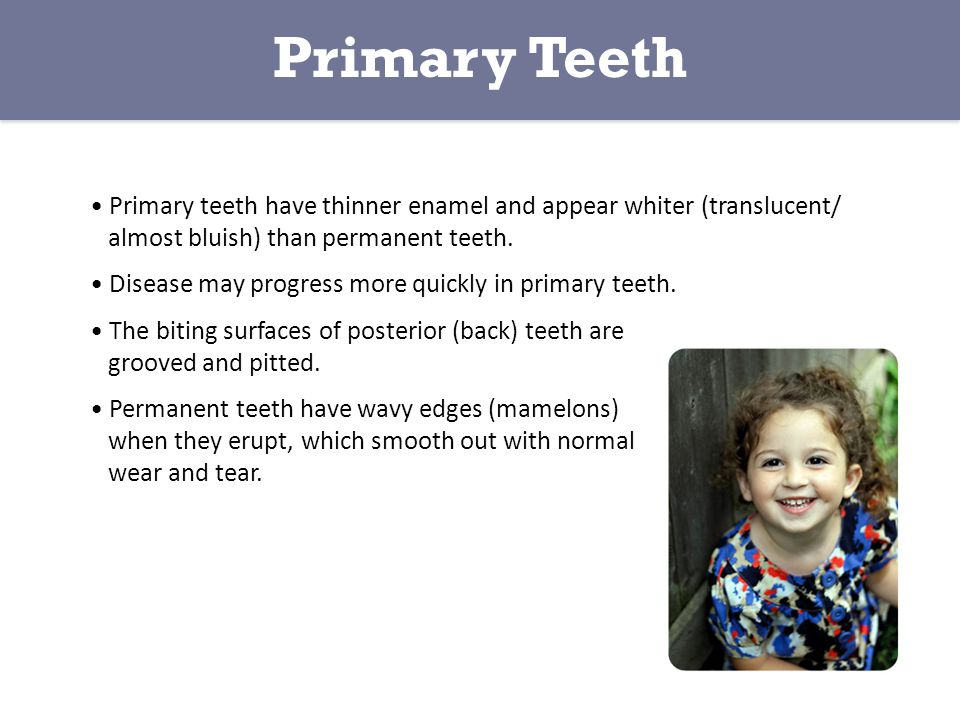 Primary teeth have thinner enamel and appear whiter (translucent/ almost bluish) than permanent teeth.