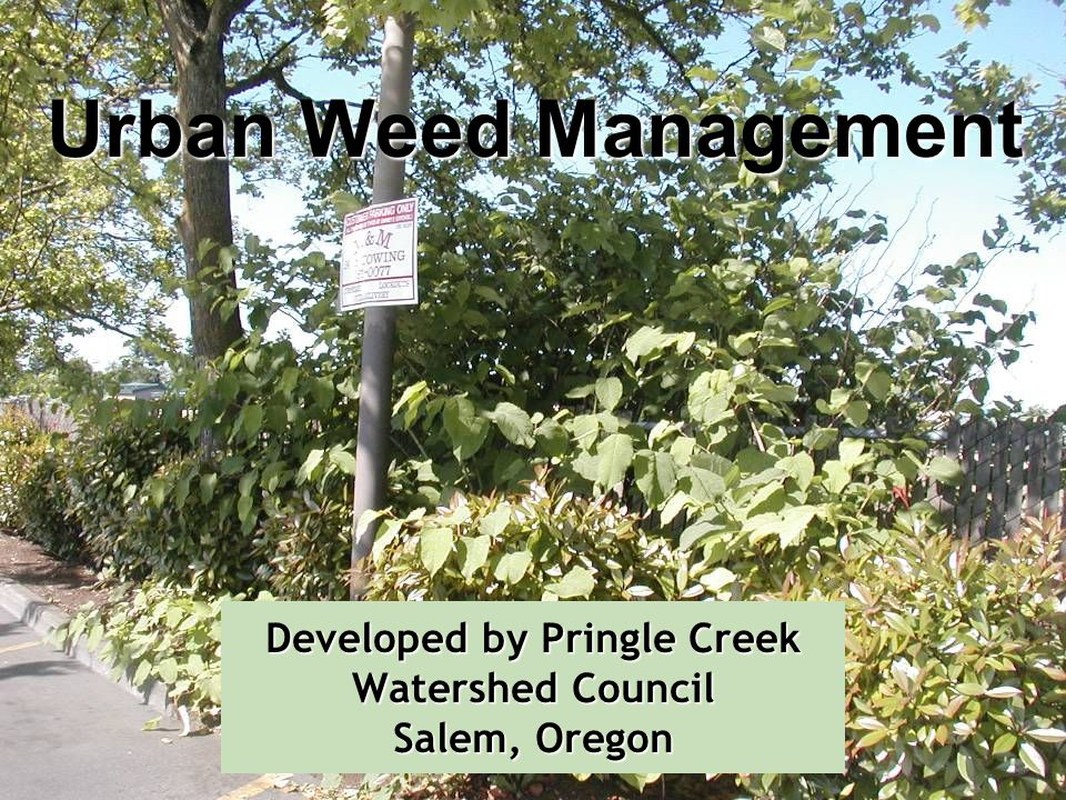 Developed by Pringle Creek Watershed Council Salem, Oregon Urban Weed Management
