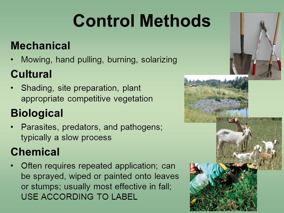 Control Methods Mechanical Mowing, hand pulling, burning, solarizing Cultural Shading, site preparation, plant appropriate competitive vegetation Biological Parasites, predators, and pathogens; typically a slow process Chemical Often requires repeated application; can be sprayed, wiped or painted onto leaves or stumps; usually most effective in fall; USE ACCORDING TO LABEL