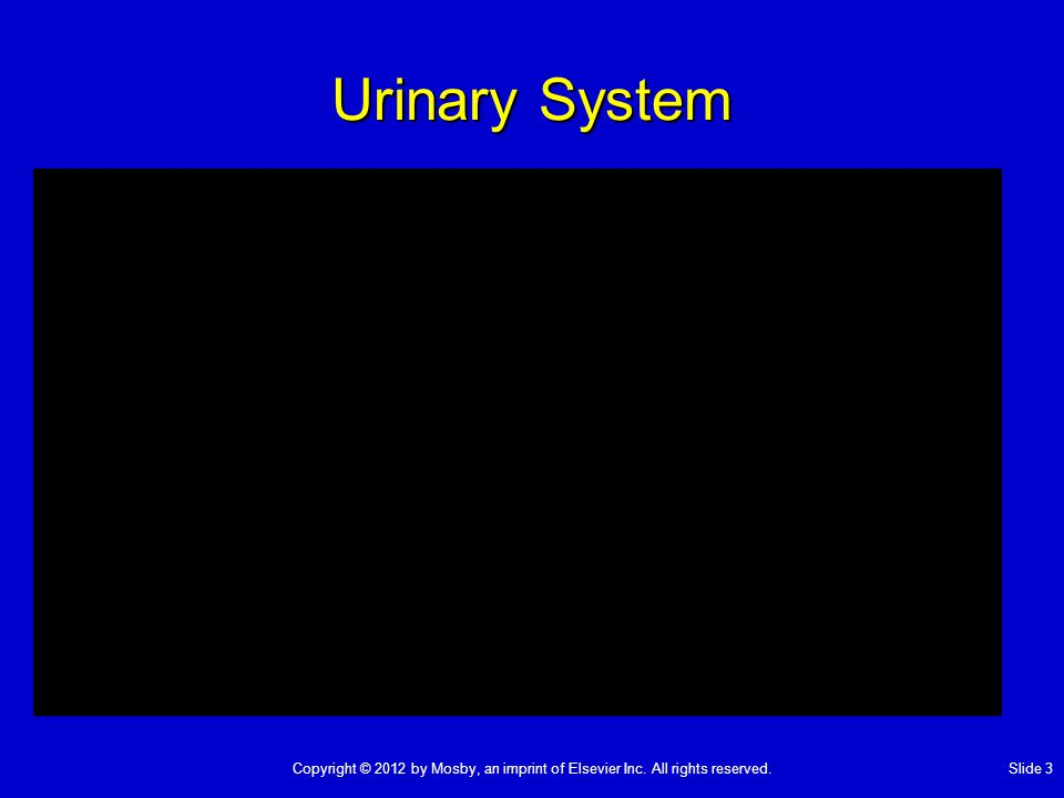 Urinary System Copyright © 2012 by Mosby, an imprint of Elsevier Inc. All rights reserved. Slide 3