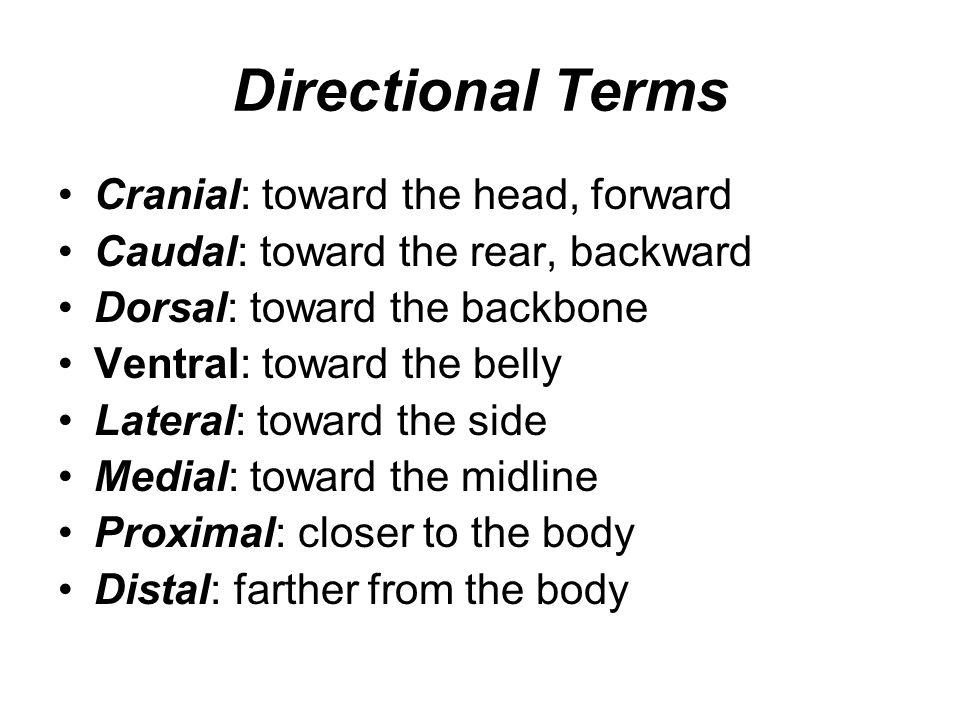 Directional Terms Cranial: toward the head, forward Caudal: toward the rear, backward Dorsal: toward the backbone Ventral: toward the belly Lateral: t