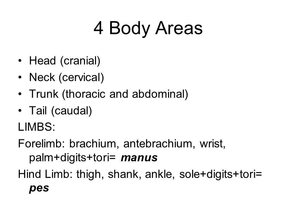 4 Body Areas Head (cranial) Neck (cervical) Trunk (thoracic and abdominal) Tail (caudal) LIMBS: Forelimb: brachium, antebrachium, wrist, palm+digits+t