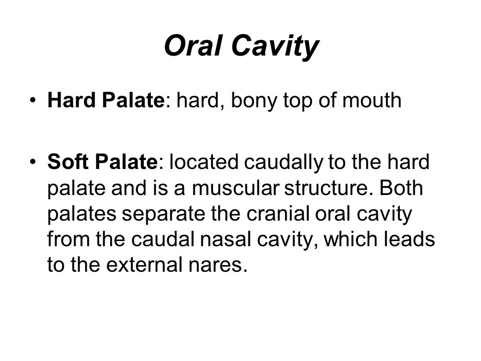 Oral Cavity Tongue: dorsal surface is covered with papillae (rough) for grooming and with taste buds along side and at base Teeth: Incisors: cranial ends of both upper and lower jaws (three pairs) Canines: located one on each side caudally to the incisors (4) Premolars: located caudally to the canines (6 in upper jaw and 4 in lower) Molars: caudal to the premolars (one pair on both the upper and lower jaws)