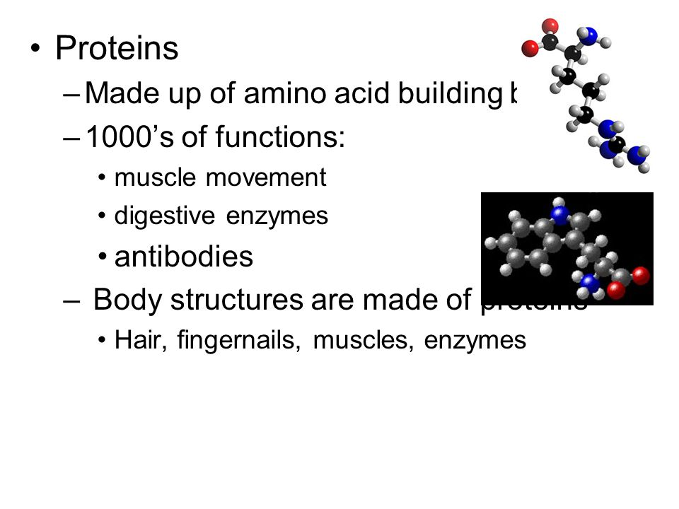 Proteins –Made up of amino acid building blocks –1000's of functions: muscle movement digestive enzymes antibodies – Body structures are made of proteins Hair, fingernails, muscles, enzymes