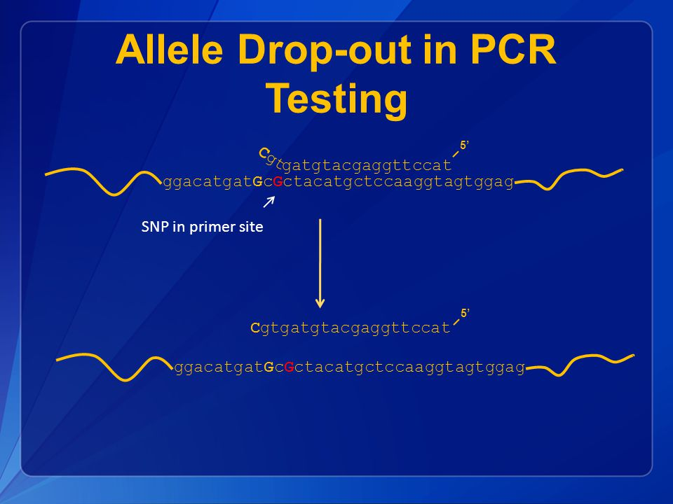 Allele Drop-out in PCR Testing SNP in primer site ggacatgatGcGctacatgctccaaggtagtggag gatgtacgaggttccat 5' ggacatgatGcGctacatgctccaaggtagtggag Cgtgatgtacgaggttccat 5' Cgt