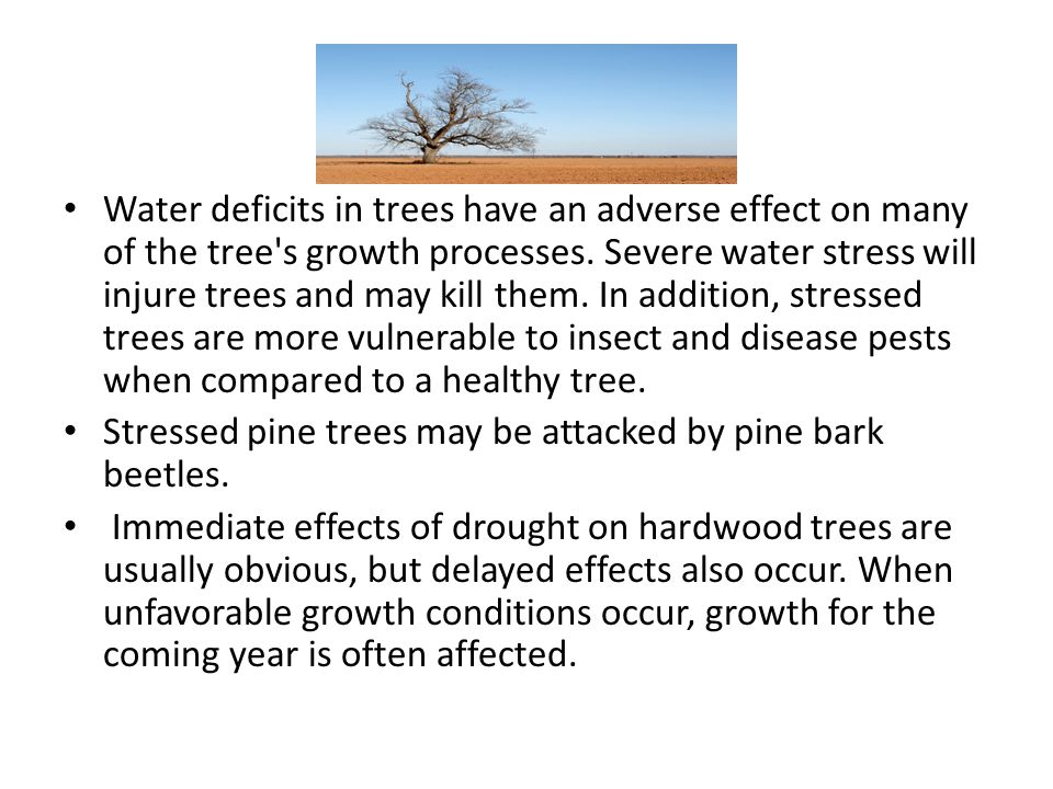 Water deficits in trees have an adverse effect on many of the tree's growth processes. Severe water stress will injure trees and may kill them. In add
