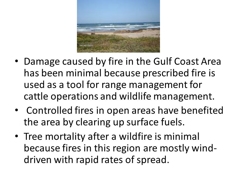 Damage caused by fire in the Gulf Coast Area has been minimal because prescribed fire is used as a tool for range management for cattle operations and