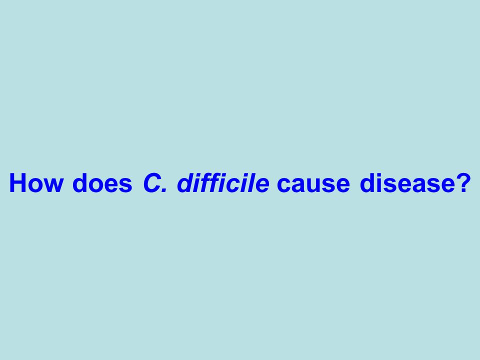 How does C. difficile cause disease?