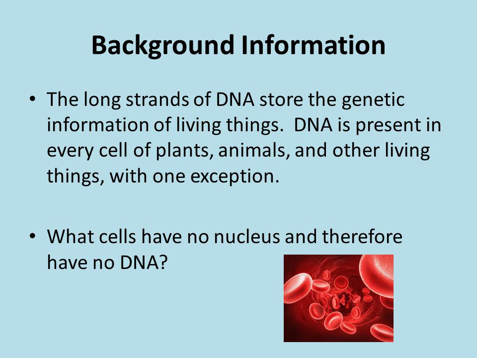 Background Information The long strands of DNA store the genetic information of living things. DNA is present in every cell of plants, animals, and ot