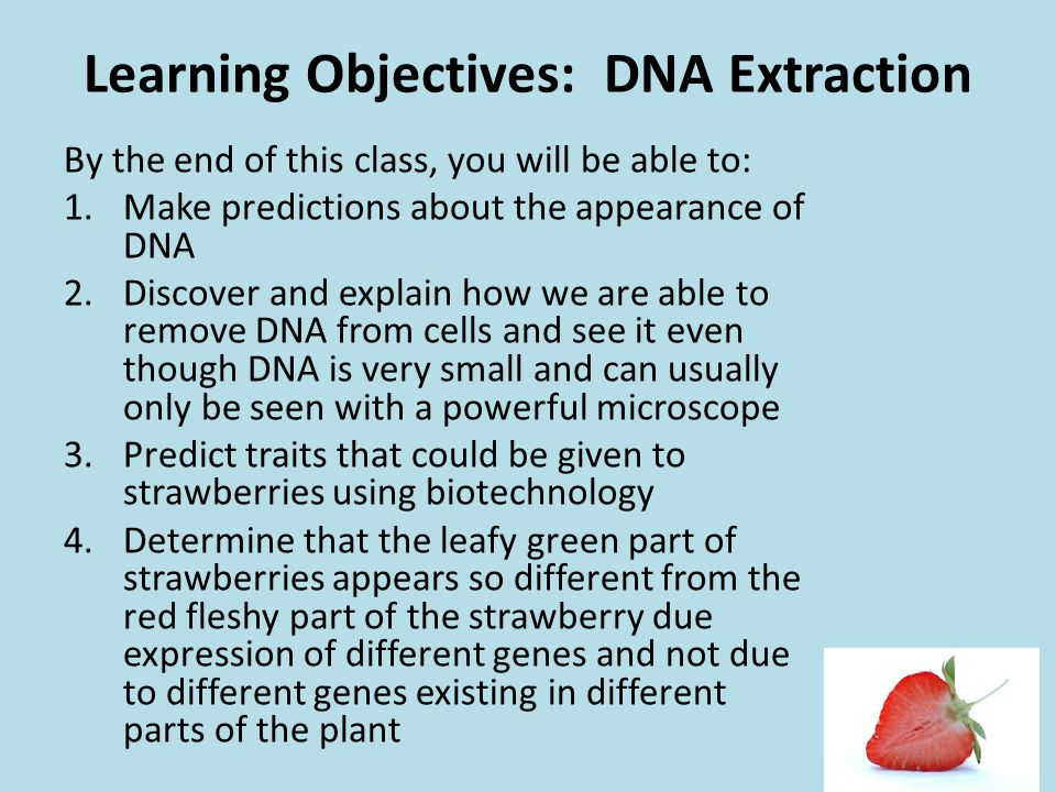 Learning Objectives: DNA Extraction By the end of this class, you will be able to: 1.Make predictions about the appearance of DNA 2.Discover and expla