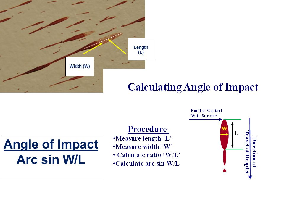Cast Off Sequence  First blow causes bleeding  Subsequent blows contaminate weapon with blood  Blood is cast-off tangentially to arc of upswing or backswing  Pattern & intensity depends on: type of weapon amount of blood adhering to weapon length of arc