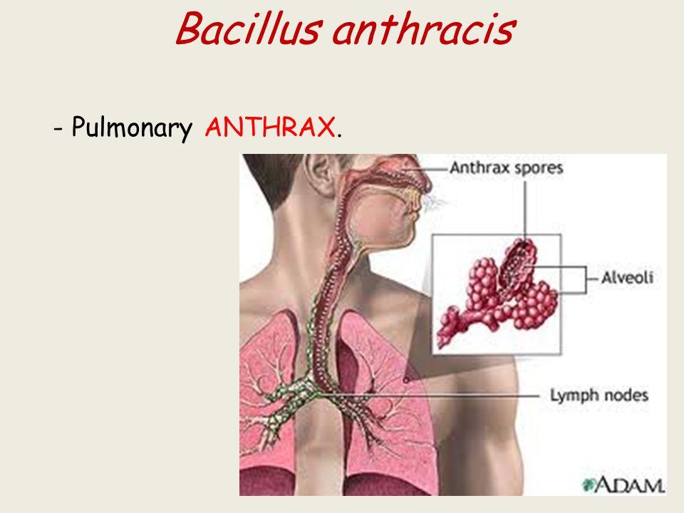 Bacillus anthracis - Pulmonary ANTHRAX.