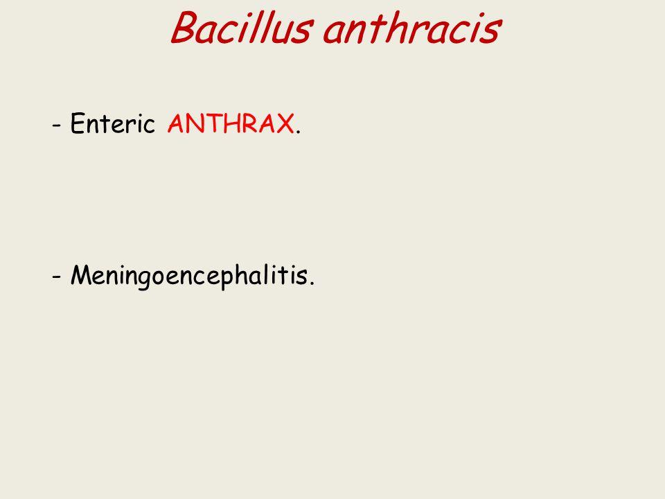 Bacillus anthracis - Enteric ANTHRAX. - Meningoencephalitis.