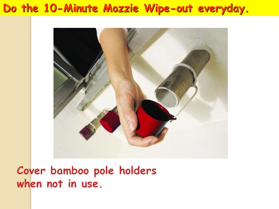 Do the 10-Minute Mozzie Wipe-out everyday. Turn over all pails and water storage containers.