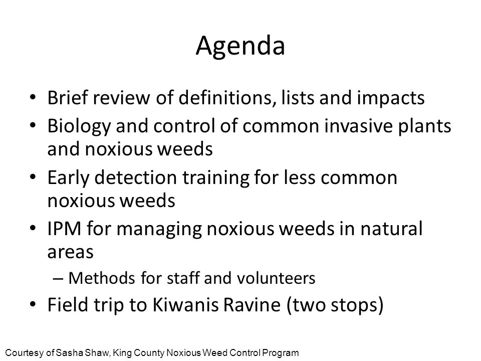 Agenda Brief review of definitions, lists and impacts Biology and control of common invasive plants and noxious weeds Early detection training for less common noxious weeds IPM for managing noxious weeds in natural areas – Methods for staff and volunteers Field trip to Kiwanis Ravine (two stops) Courtesy of Sasha Shaw, King County Noxious Weed Control Program