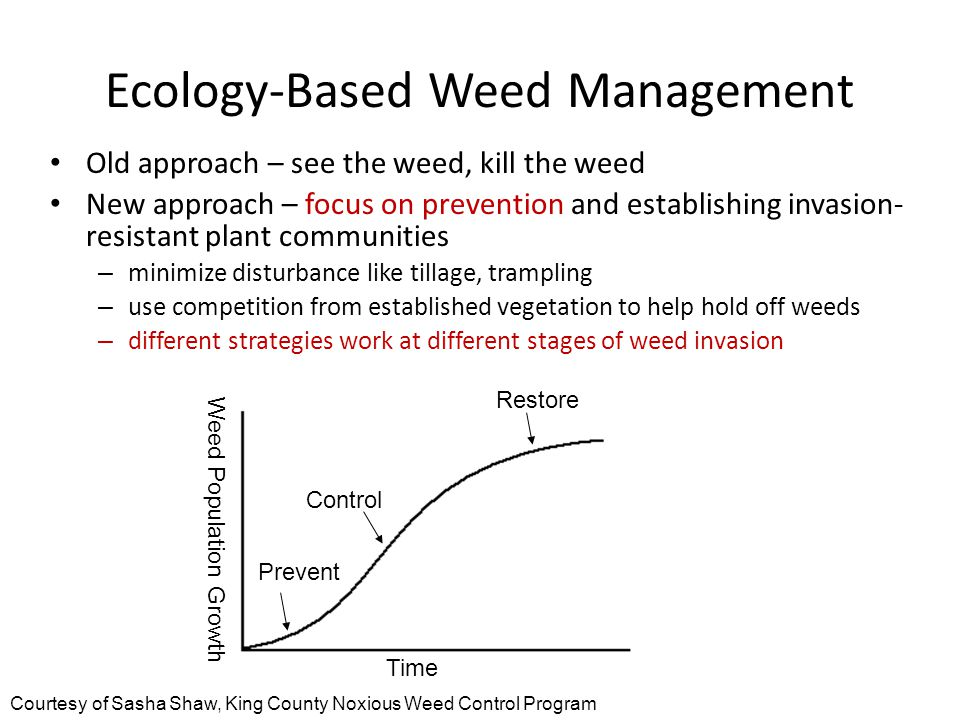 Ecology-Based Weed Management Old approach – see the weed, kill the weed New approach – focus on prevention and establishing invasion- resistant plant communities – minimize disturbance like tillage, trampling – use competition from established vegetation to help hold off weeds – different strategies work at different stages of weed invasion Prevent Control Restore Weed Population Growth Time Courtesy of Sasha Shaw, King County Noxious Weed Control Program