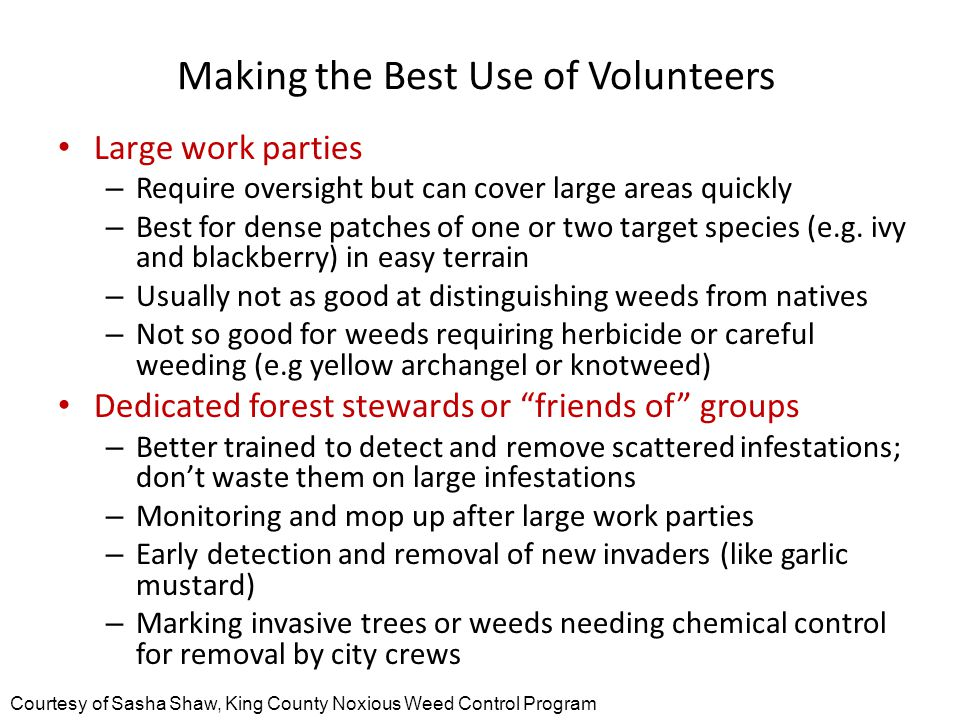 Making the Best Use of Volunteers Large work parties – Require oversight but can cover large areas quickly – Best for dense patches of one or two target species (e.g.