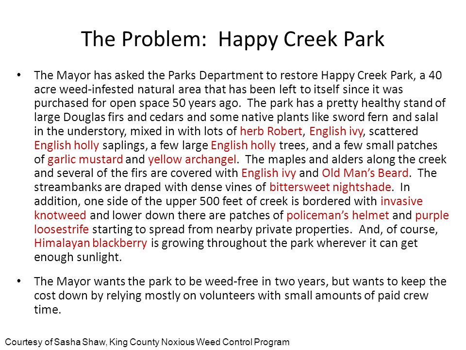 The Problem: Happy Creek Park The Mayor has asked the Parks Department to restore Happy Creek Park, a 40 acre weed-infested natural area that has been left to itself since it was purchased for open space 50 years ago.