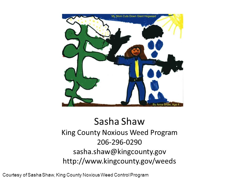 Sasha Shaw King County Noxious Weed Program 206-296-0290 sasha.shaw@kingcounty.gov http://www.kingcounty.gov/weeds Courtesy of Sasha Shaw, King County Noxious Weed Control Program