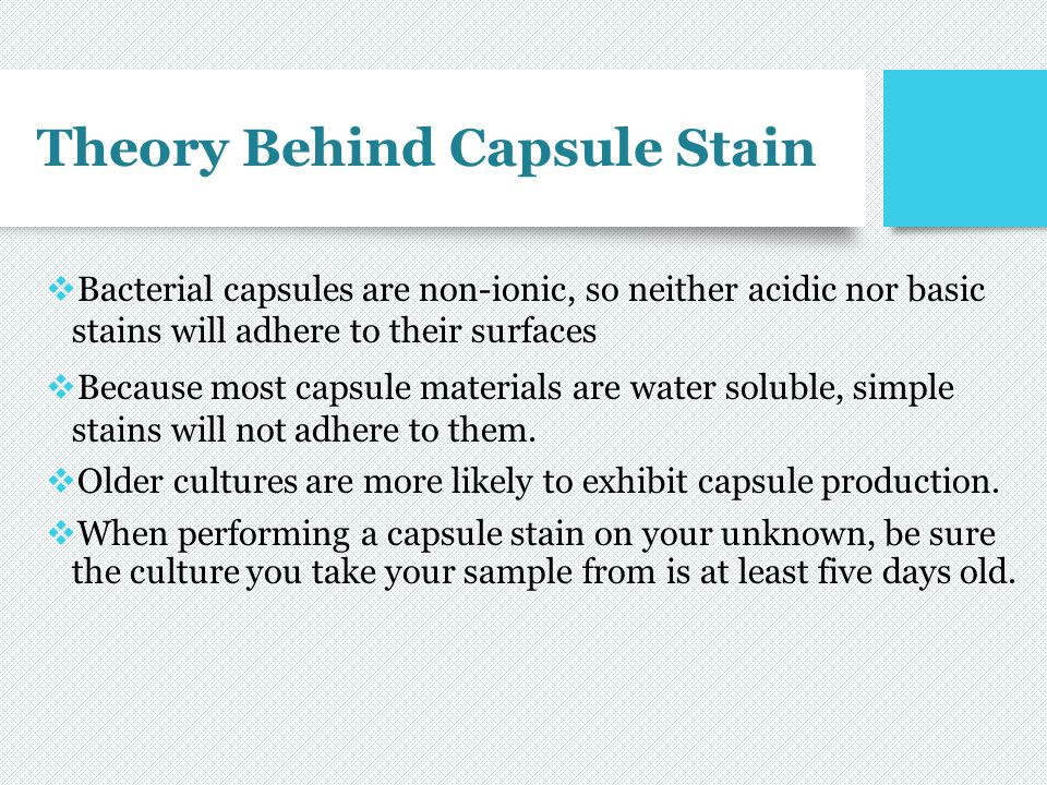 Theory Behind Capsule Stain  Bacterial capsules are non-ionic, so neither acidic nor basic stains will adhere to their surfaces  Because most capsul