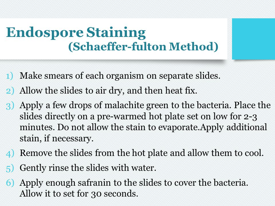 Endospore Staining (Schaeffer-fulton Method) 1)Make smears of each organism on separate slides. 2)Allow the slides to air dry, and then heat fix. 3)Ap