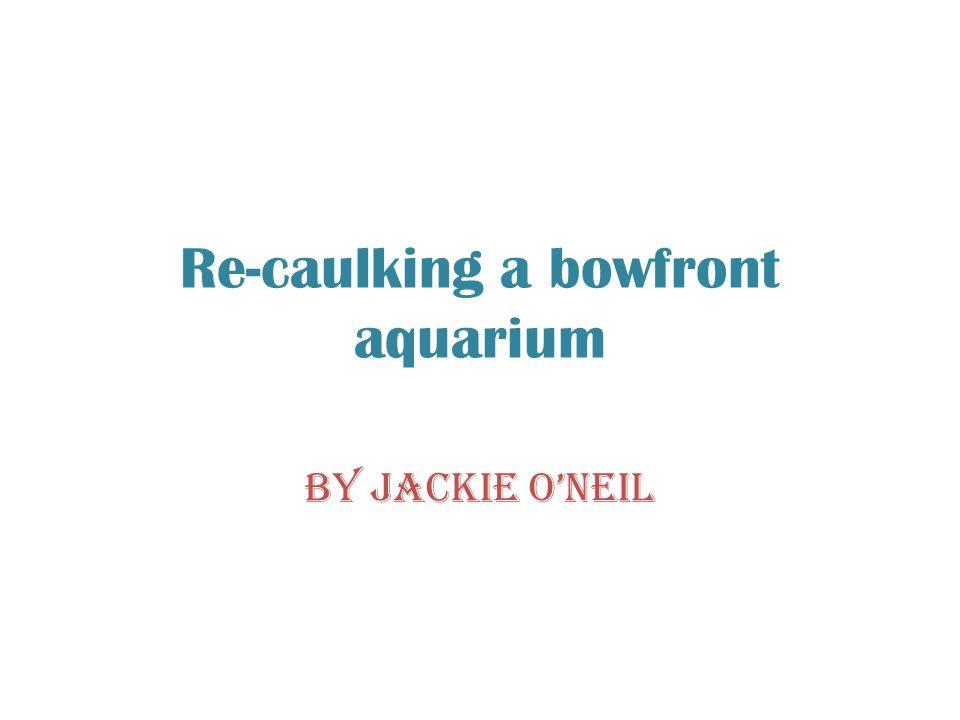 Re-caulking a bowfront aquarium By Jackie O'Neil