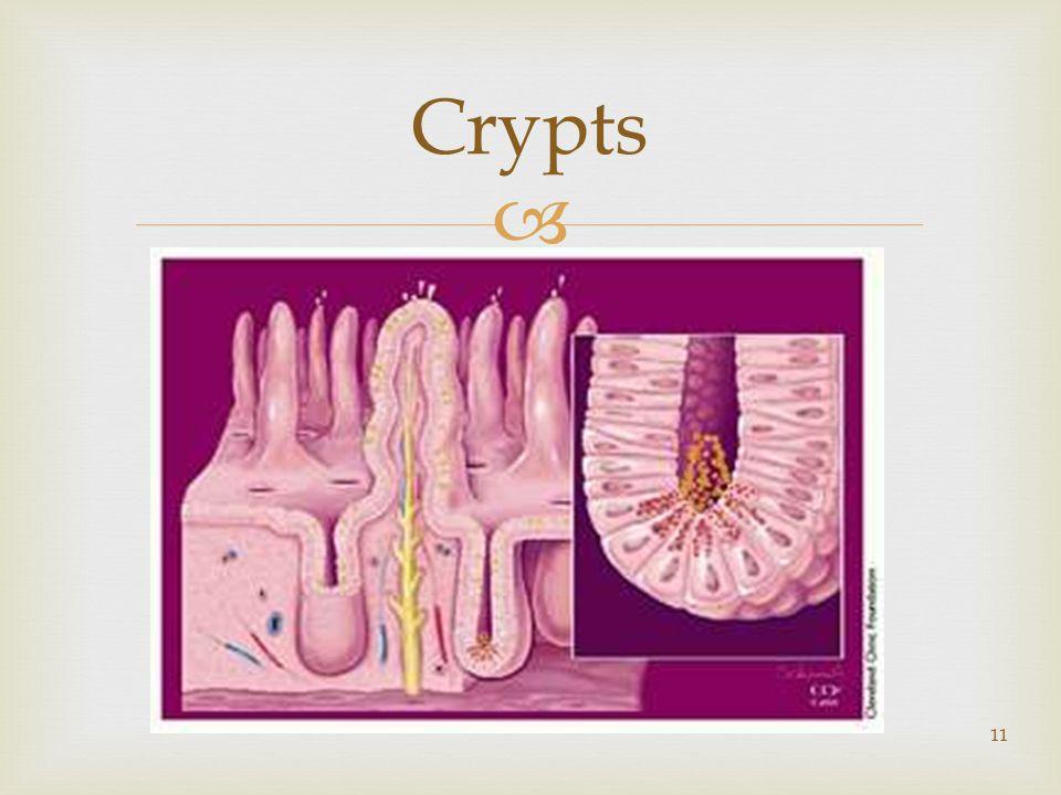  11 Crypts