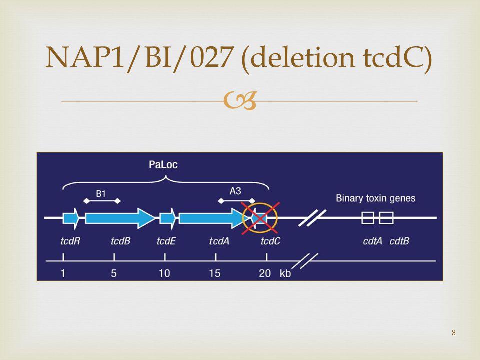  8 NAP1/BI/027 (deletion tcdC)