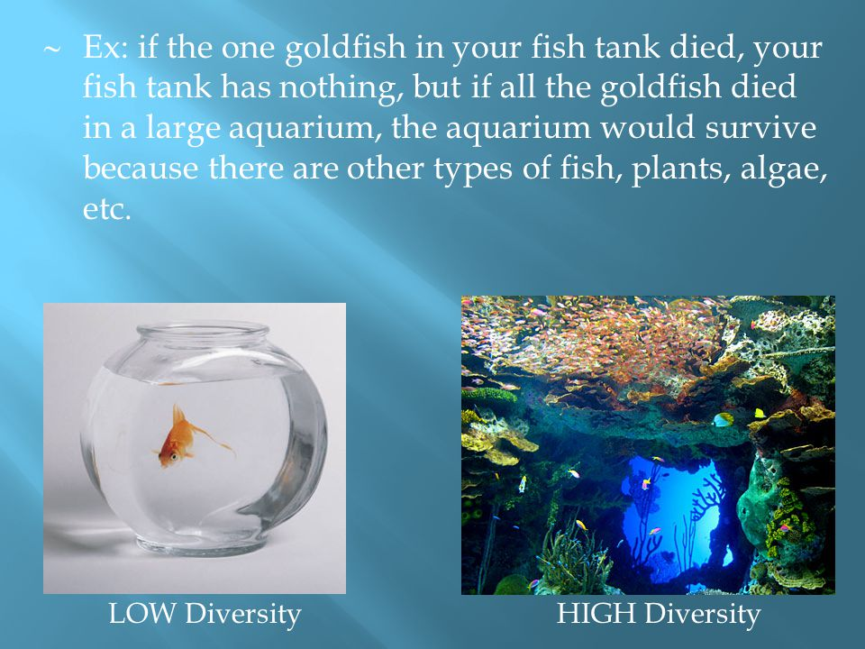  Ex: if the one goldfish in your fish tank died, your fish tank has nothing, but if all the goldfish died in a large aquarium, the aquarium would sur