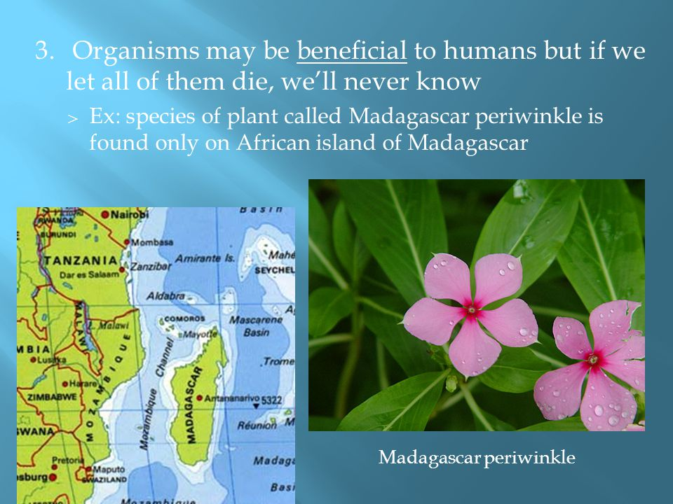 3. Organisms may be beneficial to humans but if we let all of them die, we'll never know  Ex: species of plant called Madagascar periwinkle is found