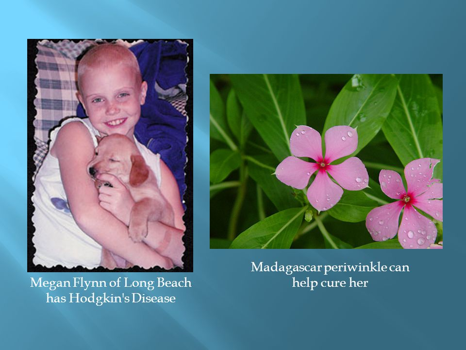 Megan Flynn of Long Beach has Hodgkin's Disease Madagascar periwinkle can help cure her