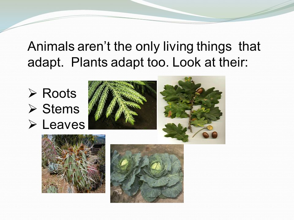 Animals aren't the only living things that adapt.Plants adapt too.
