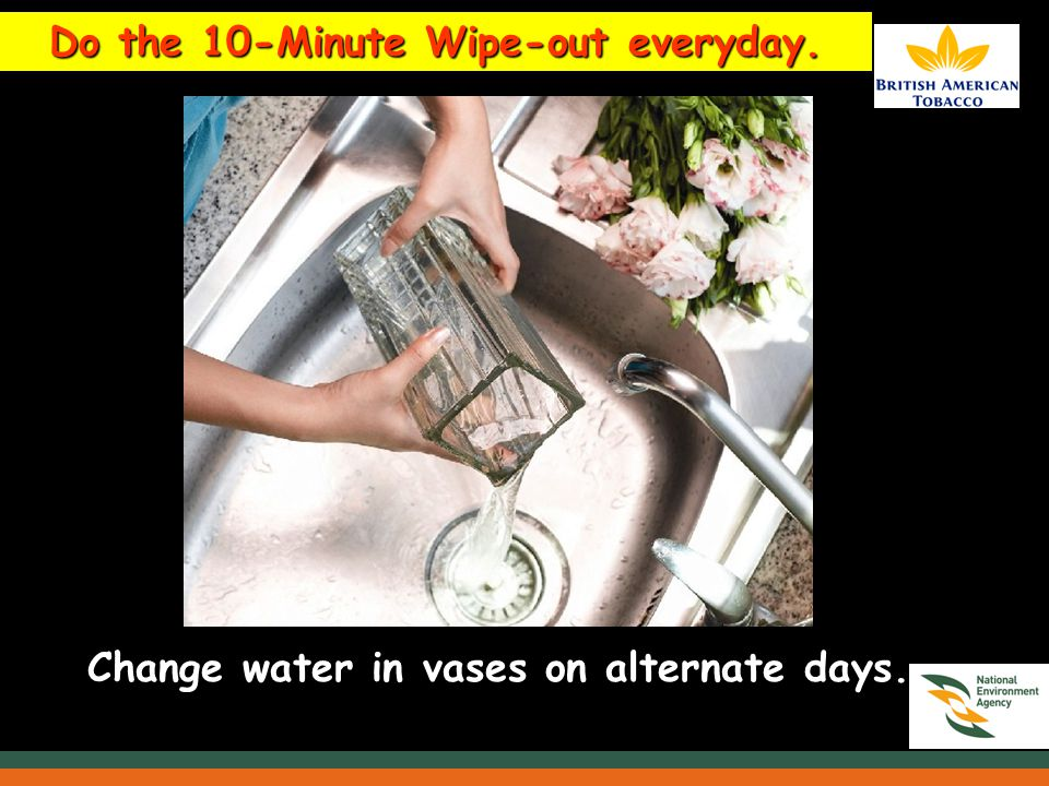 Do the 10-Minute Wipe-out everyday. Change water in vases on alternate days.