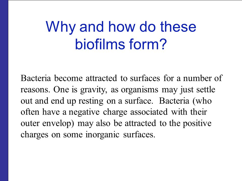 Bacteria become attracted to surfaces for a number of reasons.