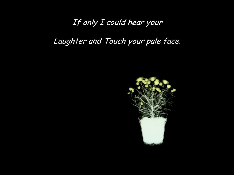 If only I could hear your Laughter and Touch your pale face.