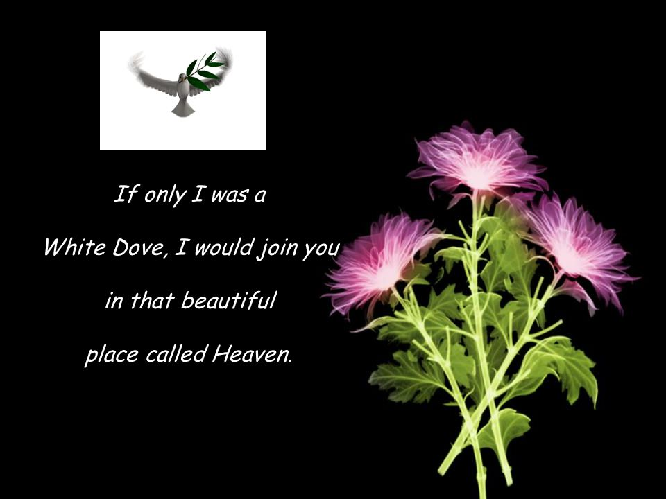 If only I was a White Dove, I would join you in that beautiful place called Heaven.