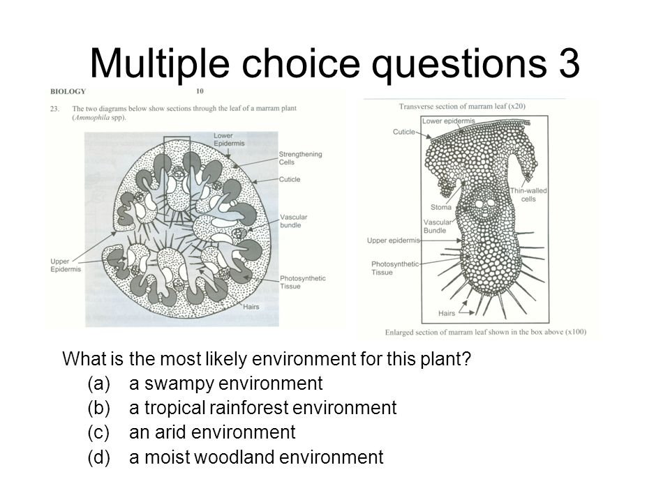 Multiple choice questions 3 What is the most likely environment for this plant.