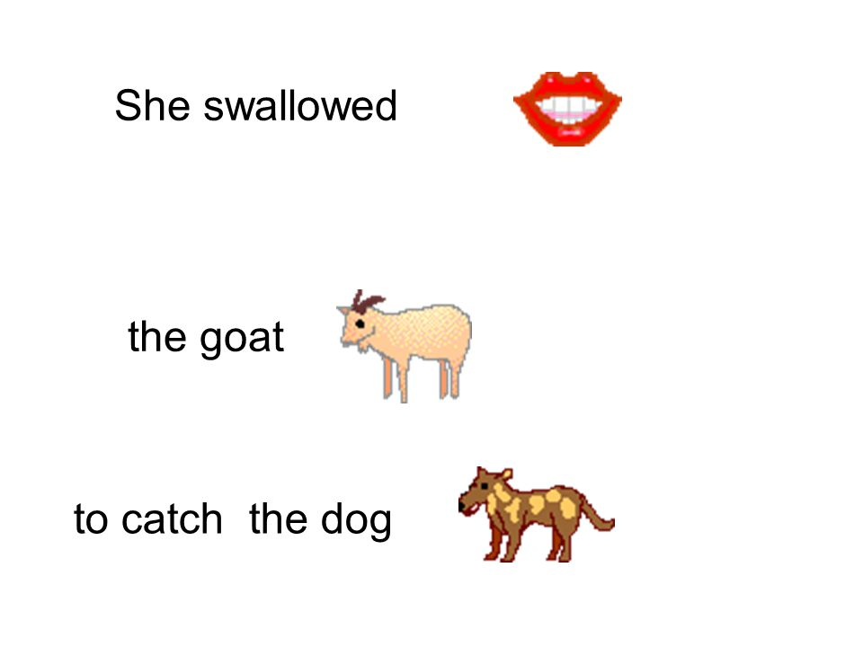 She swallowed to catch the goat the cow
