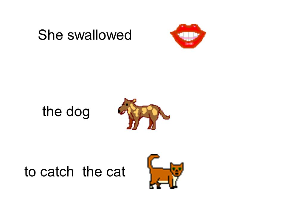 She swallowed to catch the dog the goat
