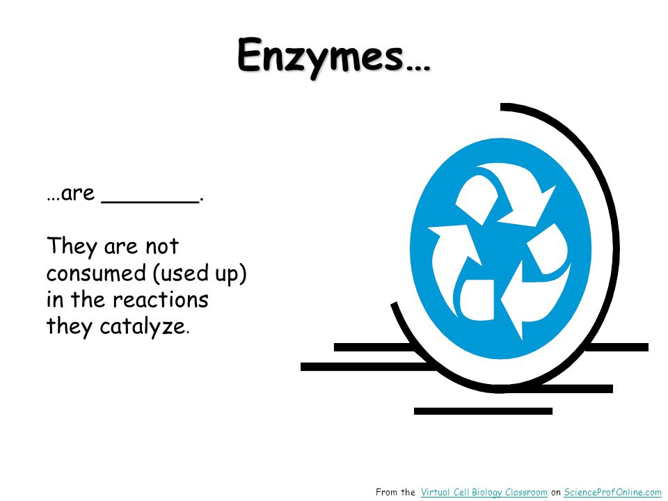 …are _______. They are not consumed (used up) in the reactions they catalyze. Enzymes… From the Virtual Cell Biology Classroom on ScienceProfOnline.co