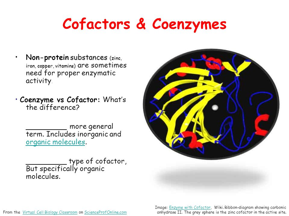 Cofactors & Coenzymes substances (zinc, iron, copper, vitamins)Non-protein substances (zinc, iron, copper, vitamins) are sometimes need for proper enz