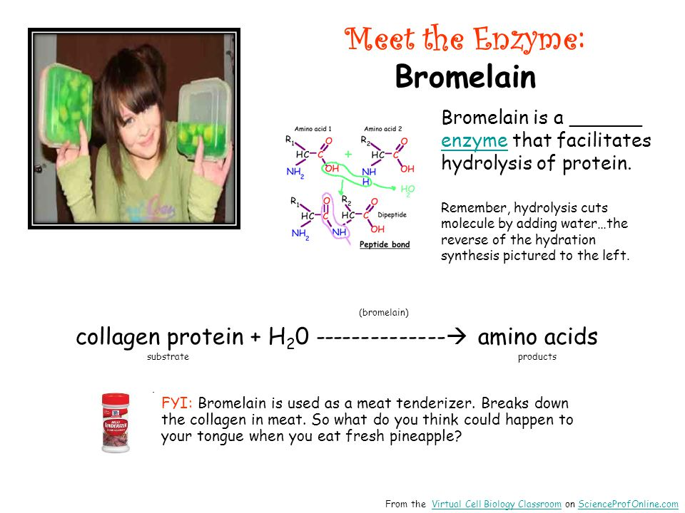 Meet the Enzyme : Bromelain (bromelain) collagen protein + H 2 0 --------------  amino acids substrate products Bromelain is a ______ enzyme that fac