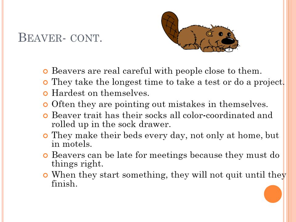 B EAVER - CONT.Beavers are real careful with people close to them.