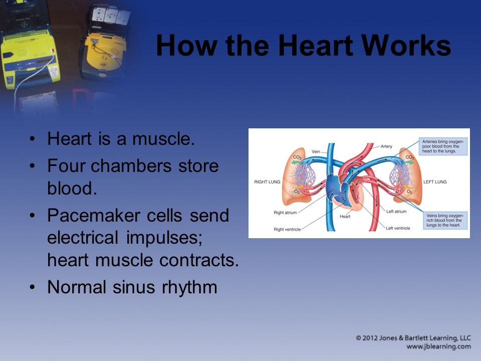 How the Heart Works Heart is a muscle.Four chambers store blood.