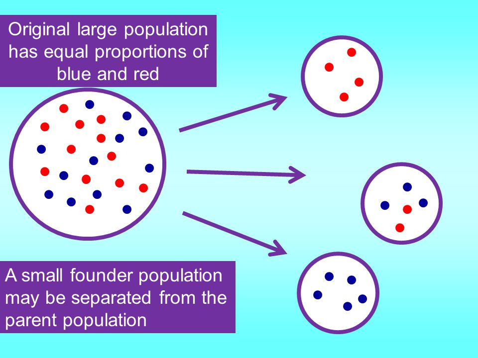 Founder Effect Small group of individuals move away from the main population. Eg a group of insects blown by wind to a small island Bottleneck Effect